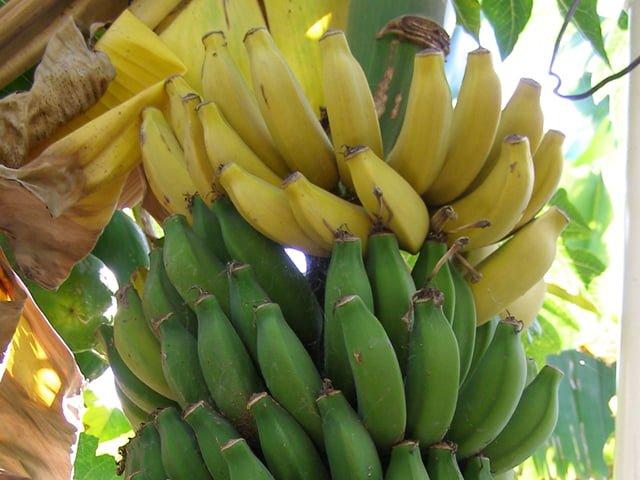 National Banana Lovers Day